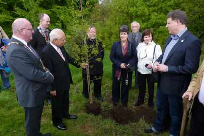 Cross Border Peace Forest project